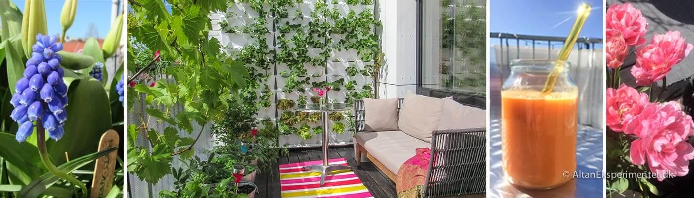 Altan Eksperimentet - Min urbane have på altanen