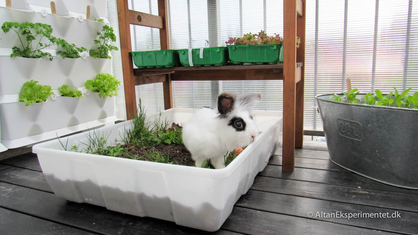 Økologisk selvforsyning for kaniner