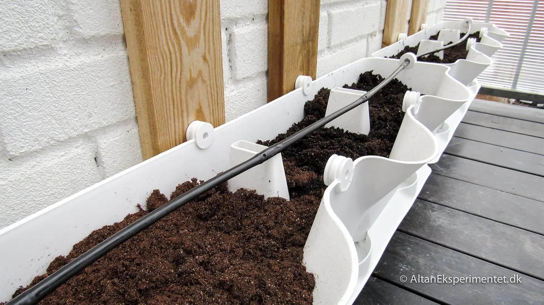 Læg dit drypvandingssystem til den side der vender udad