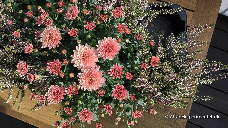 Altanbutikken photoshoot af altankasser 2019