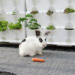 10 Års fødselsdag og fri salatbar på altanen