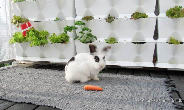10 Års fødselsdag og fri salatbar på altanen 🇩🇰