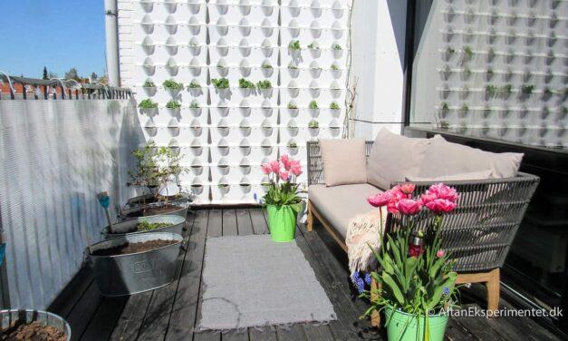 Billeder af forårsblomster på altanen
