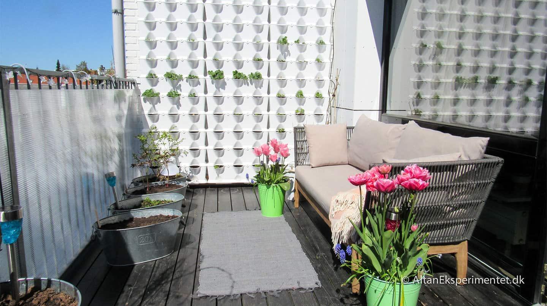 Forårsblomster på altanen - Sådan så min dejlige altan ud i det tidlige forår