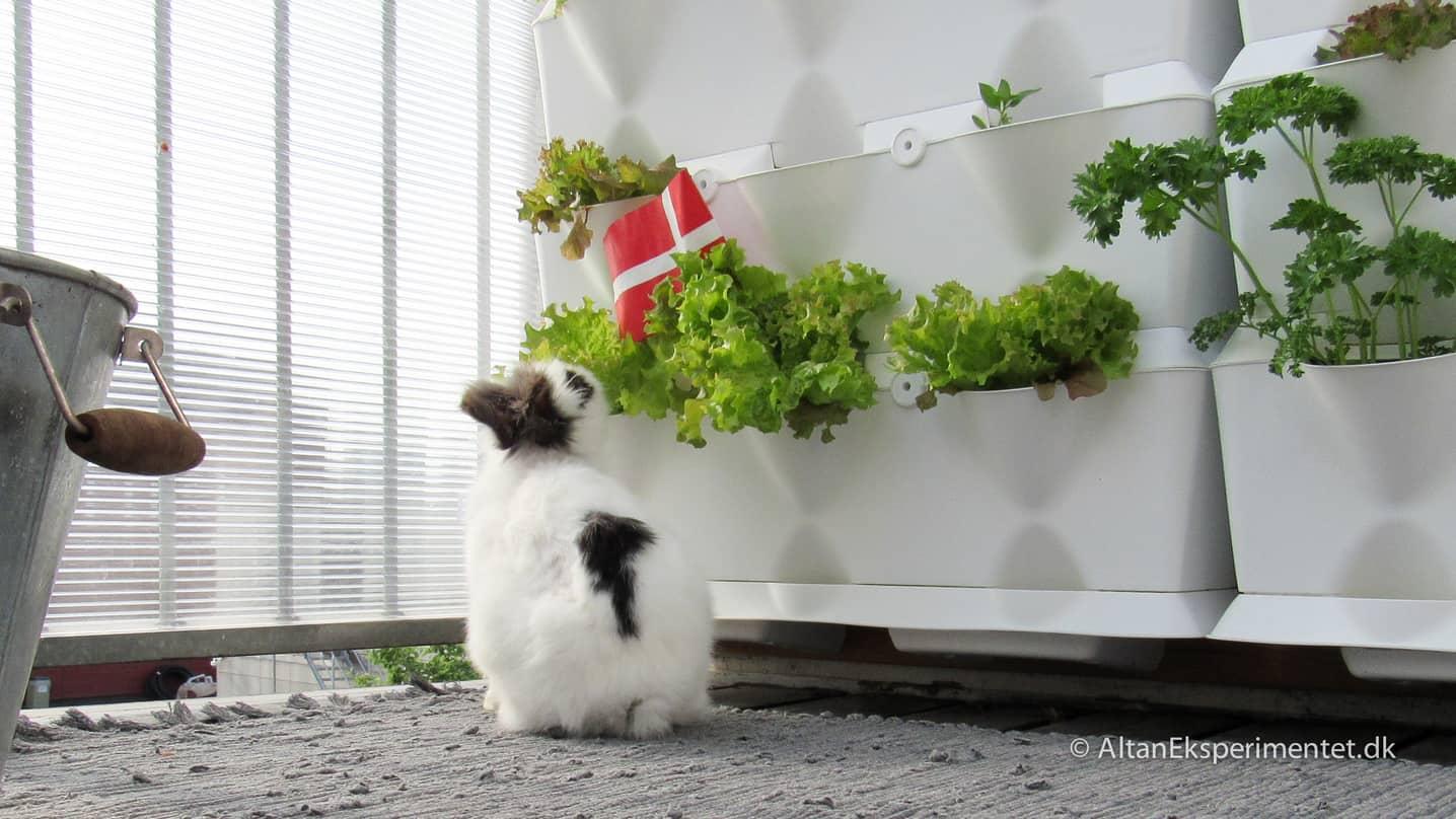 Fødselsdag og fri salatbar på altanen 🎈