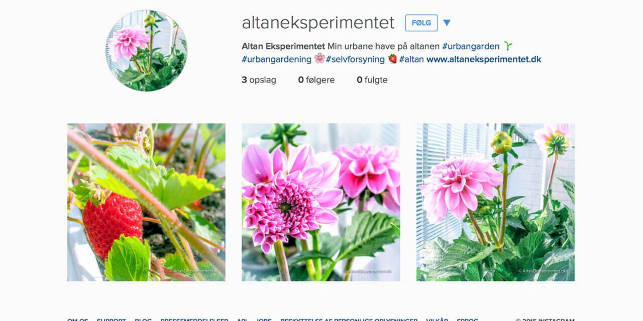 Altan Eksperimentet er kommet på Instagram