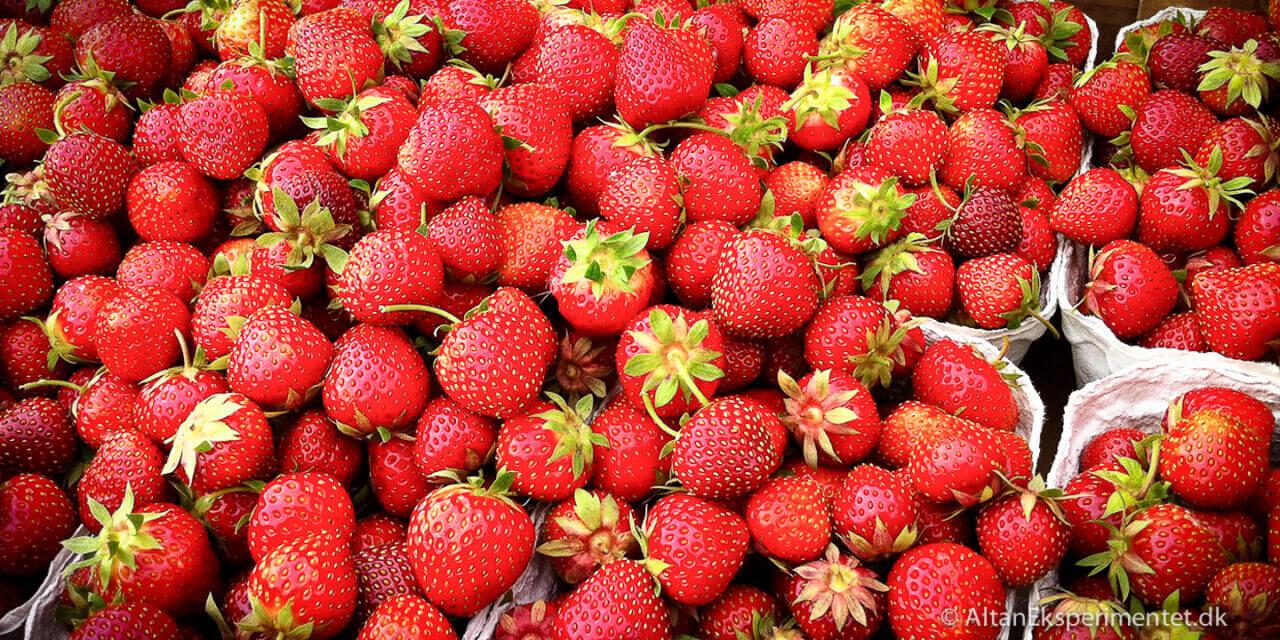 Kan man selv høste jordbærfrø?
