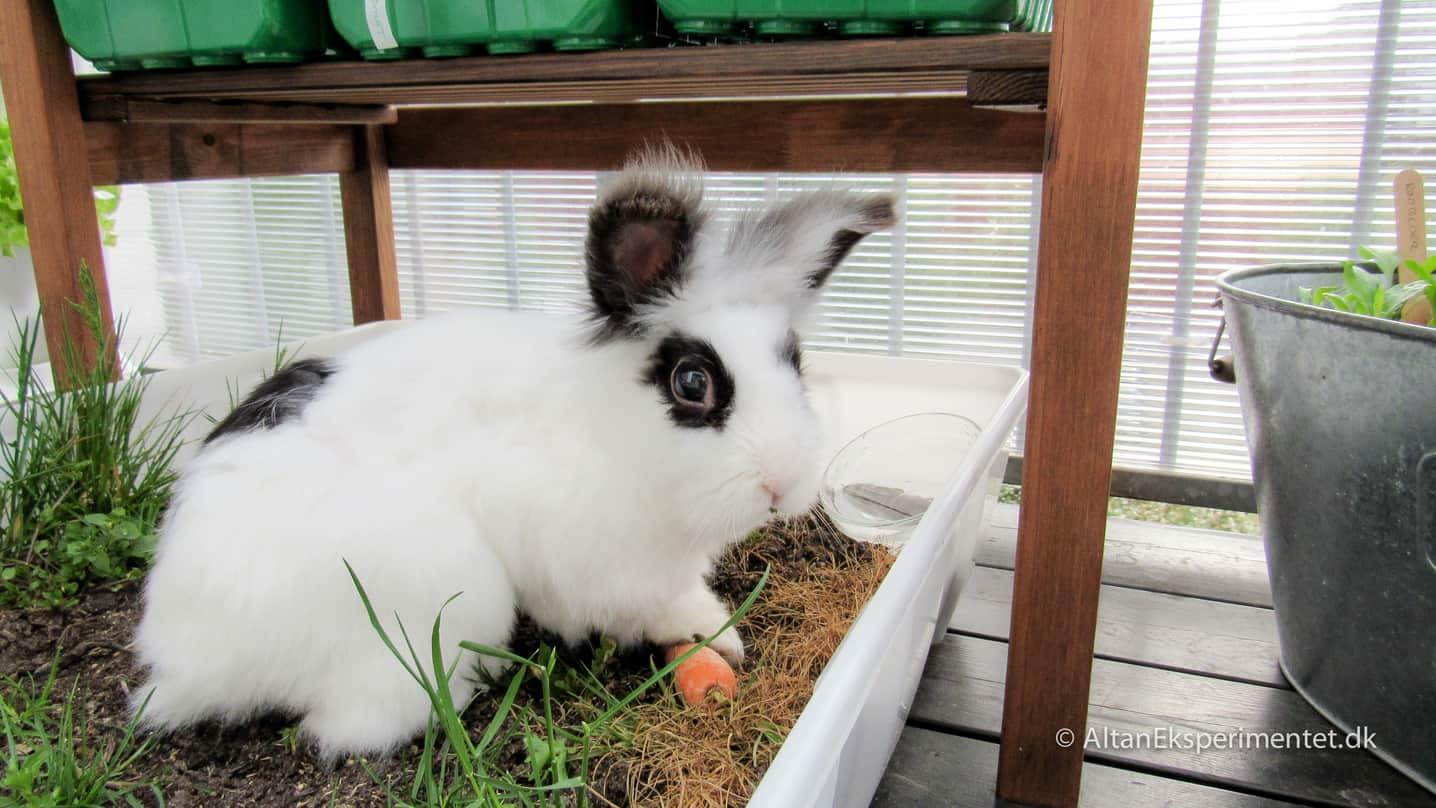 Maddie Elaine i sin elskede græsplæne på altanen