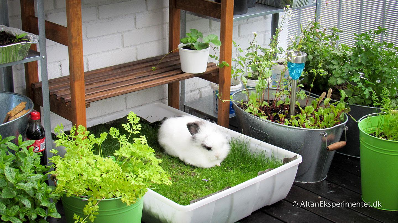 Kanin på altan