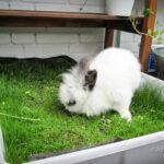 Kanin på altanen – Sådan laver du et kanin-paradis