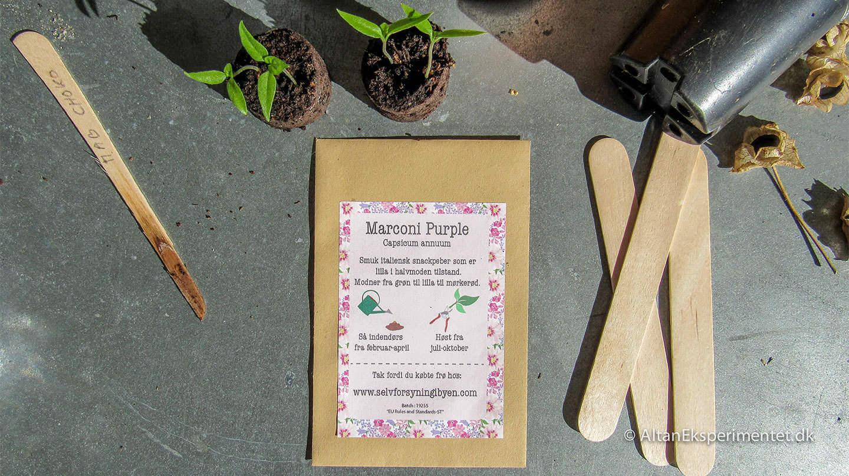 Marconi Purple Snackpeber fra Italien