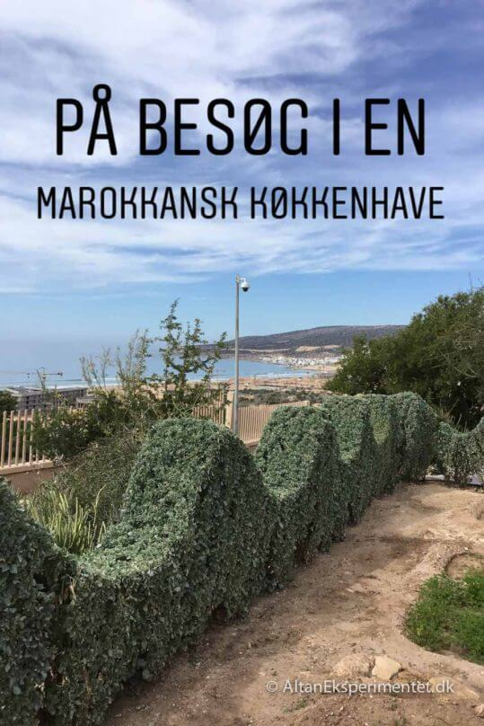 På besøg i en Marokkansk køkkenhave