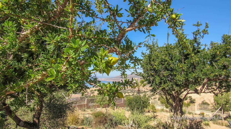 Argantræ
