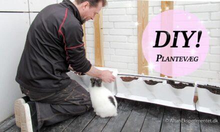 DIY • Minigarden Plantevæg – Gør det selv